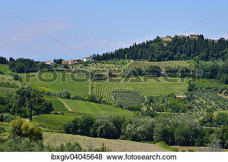 "Pictures of ""Landscape with vineyards in the Chianti Classico."