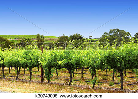 Pictures of McLaren Vale, Fleurieu Peninsula, South Australia, one.