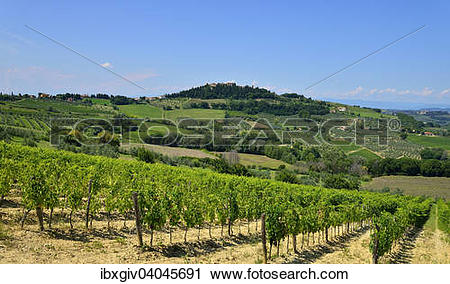 "Stock Photography of ""Landscape with vineyards in the Chianti."
