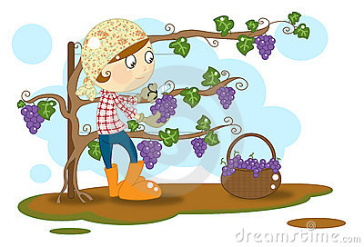 Grape Stock Illustrations.
