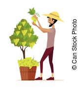 Wine harvest Clipart and Stock Illustrations. 3,640 Wine harvest.