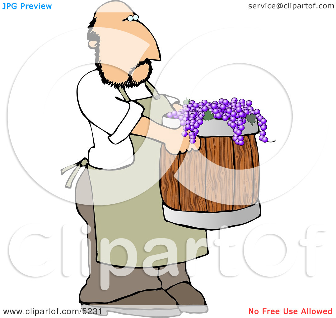 Man Harvesting Wine Grapes Clipart by Dennis Cox #5231.
