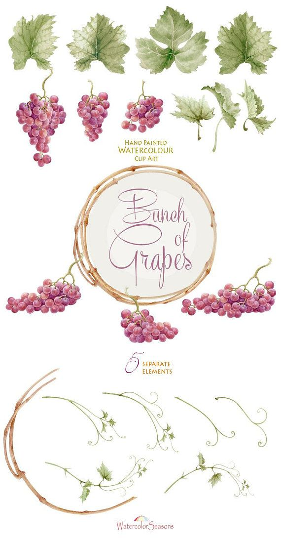 Watercolor Handpainted Clipart Bunch of Grapes Wine Label in.