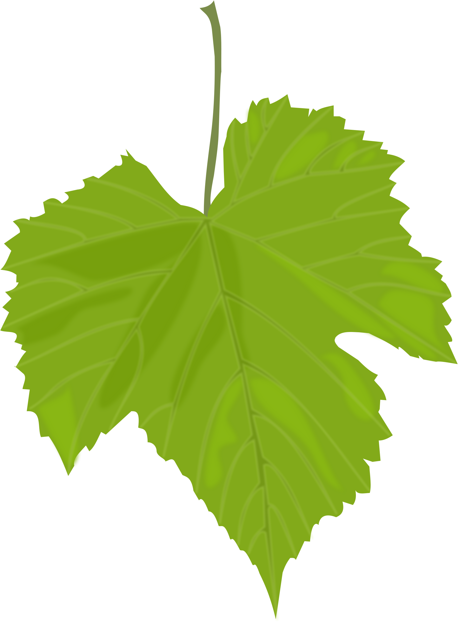 Grape leaf clipart.