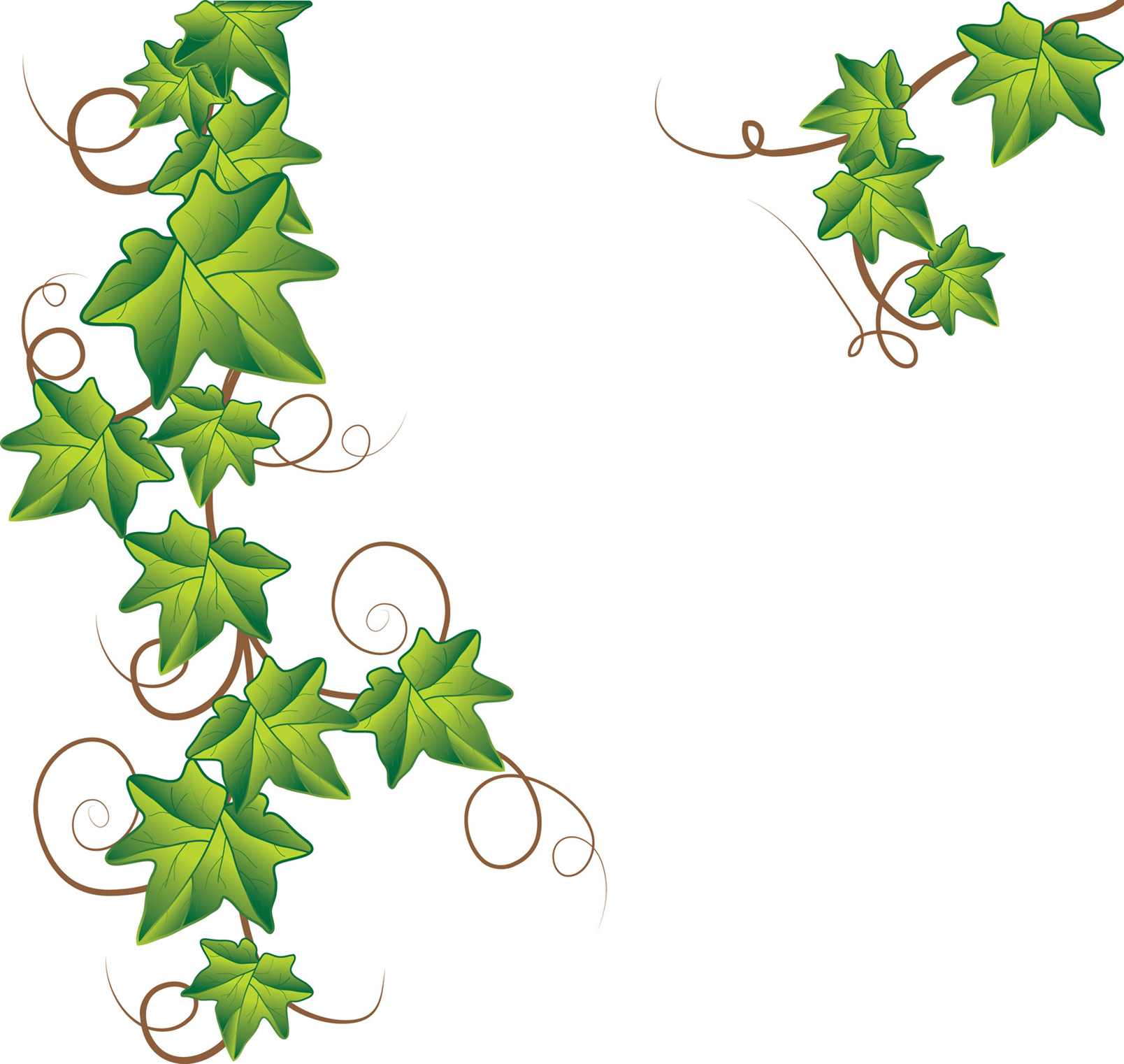 Vine leaf illustration