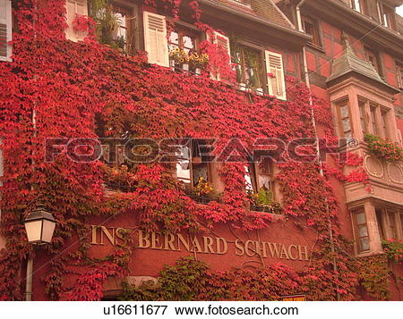 Picture of France, Europe, Alsace, Riquewihr, Haut.