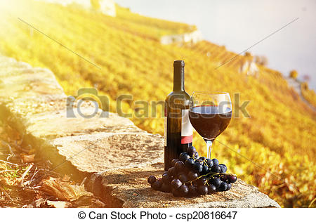 Stock Photo of Red wine and grapeson the terrace vineyard in.
