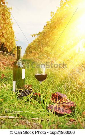 Stock Image of Red wine and grapes. Terrace vineyards in Lavaux.