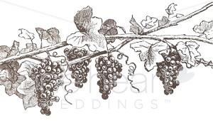 Wine Grapes Clipart.