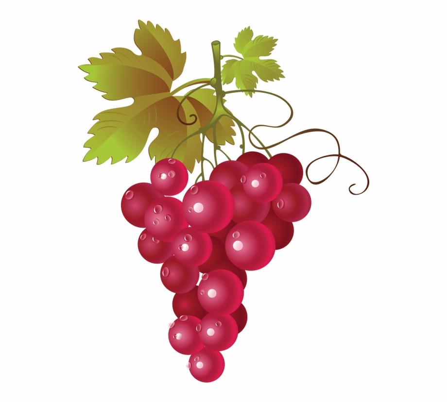 Hop Grape Vines.