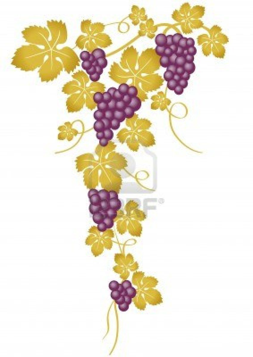 Wine Making from Grapes.