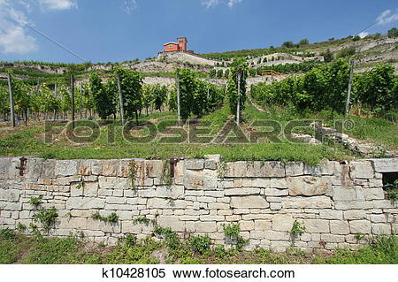 Stock Image of Winegrowing region Saale.