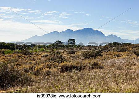 Picture of Winelands of South Africa near Stellenbosch.