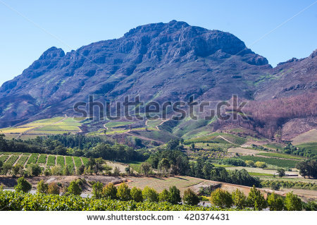 Winelands Stock Photos, Royalty.
