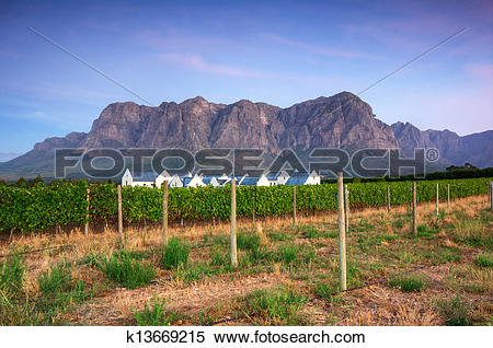 Stock Image of Sunset over a vineyard with Table Mountain in the.