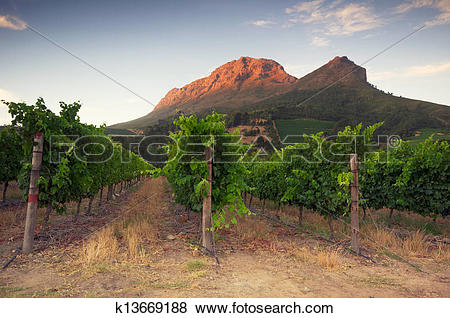 Pictures of Sunset over a vineyard with Table Mountain in the.