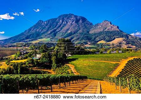 Stock Photography of Vineyards, Delaire Graff Estate, Helshoogte.