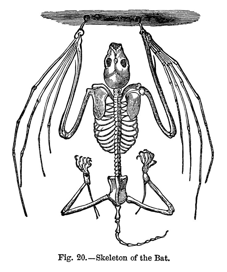 1000+ ideas about Bat Clip Art on Pinterest.