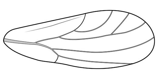 Media Search: Spondyliaspidinae.