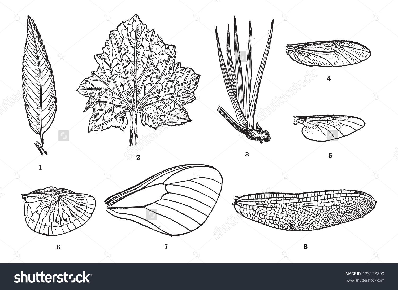 Leaf Vein Plants 123 Wing Vein Stock Vector 133128899.