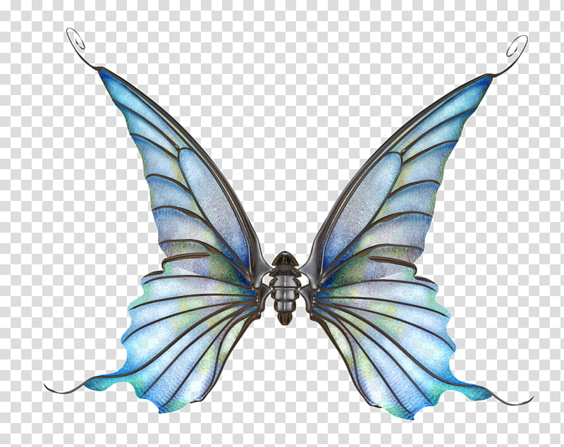 Wings Set transparent background PNG clipart.