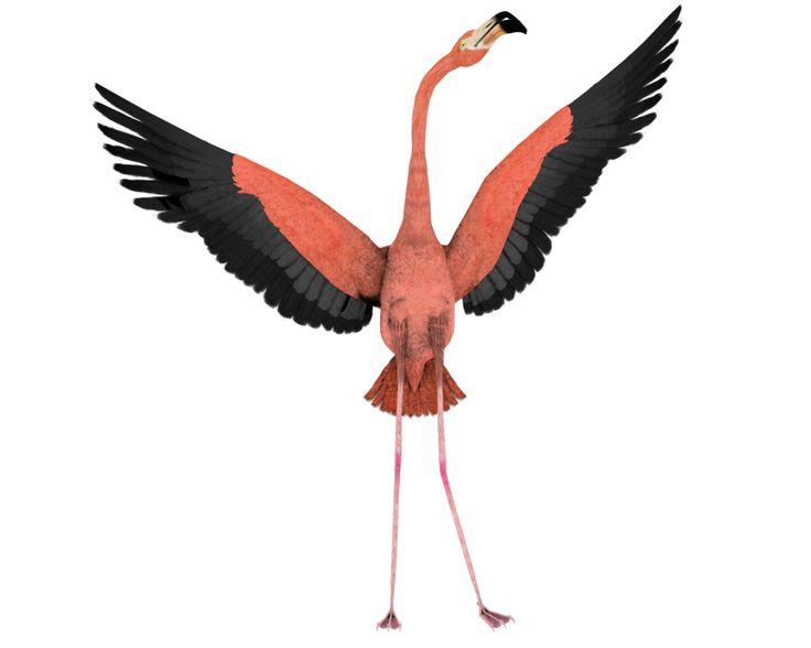 flamingo wings wide open fly.