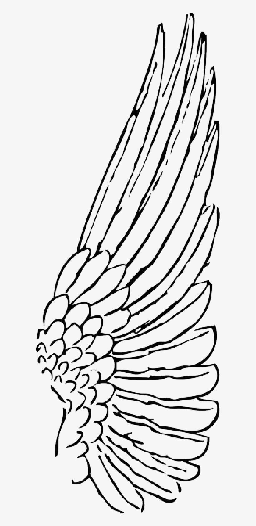 Wings Clipart Bird Wing.