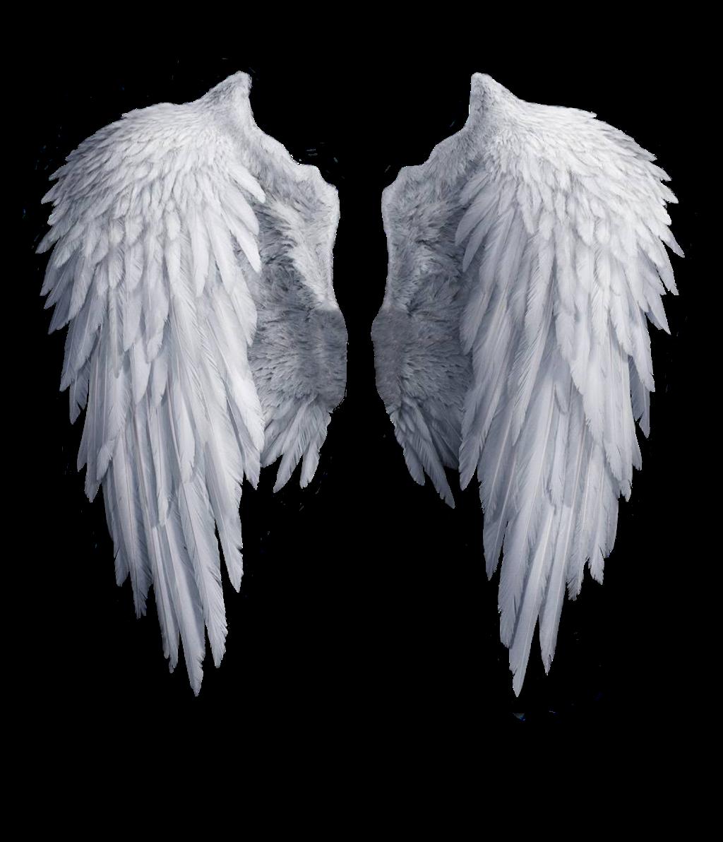 Realistic Angel Wings Png (+).
