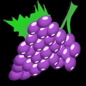 17208 Darmowe wektor winogron.