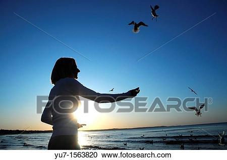 Stock Photography of Woman feeding birds, Baltic Sea, Swinoujscie.