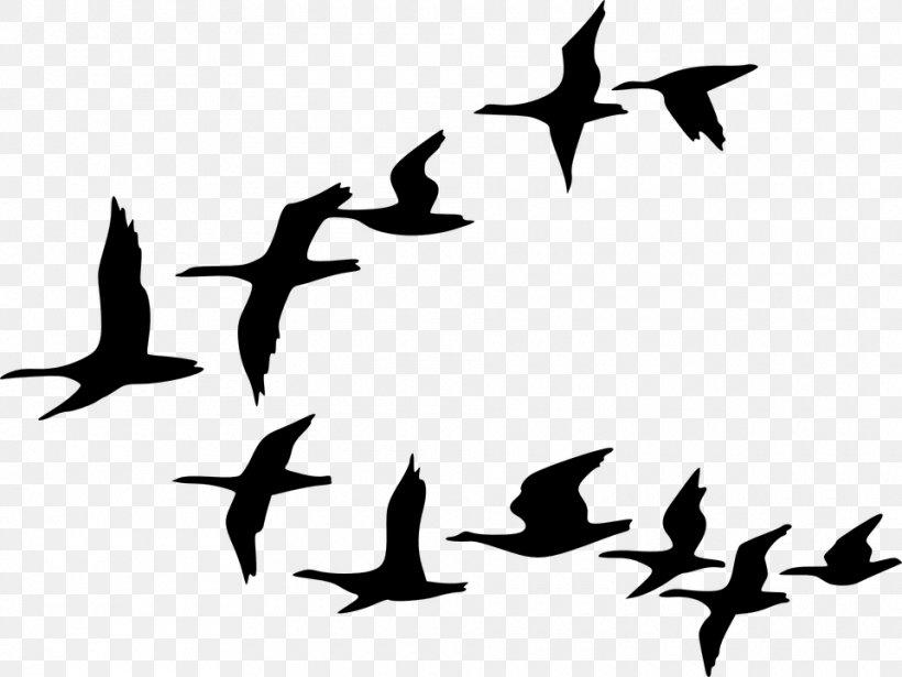 Flock Goose Bird Flight Clip Art, PNG, 960x720px, Flock.