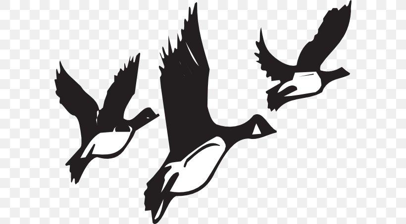 Canada Goose Bird Migration Clip Art, PNG, 600x453px, Goose.