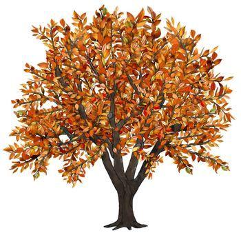 Clip Art Seasons of an Apple Tree 5 trees.