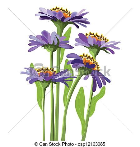Aster Illustrations and Clipart. 19,490 Aster royalty free.