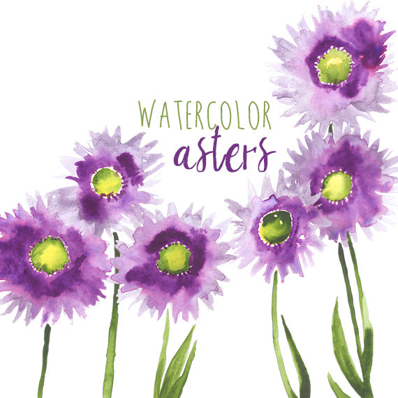 Watercolor Asters Purple Flowers Violet Daisies Purple.