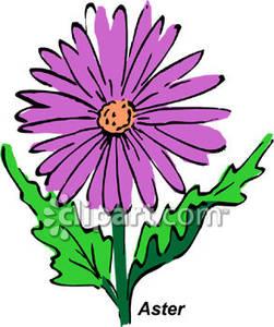 Purple Aster.