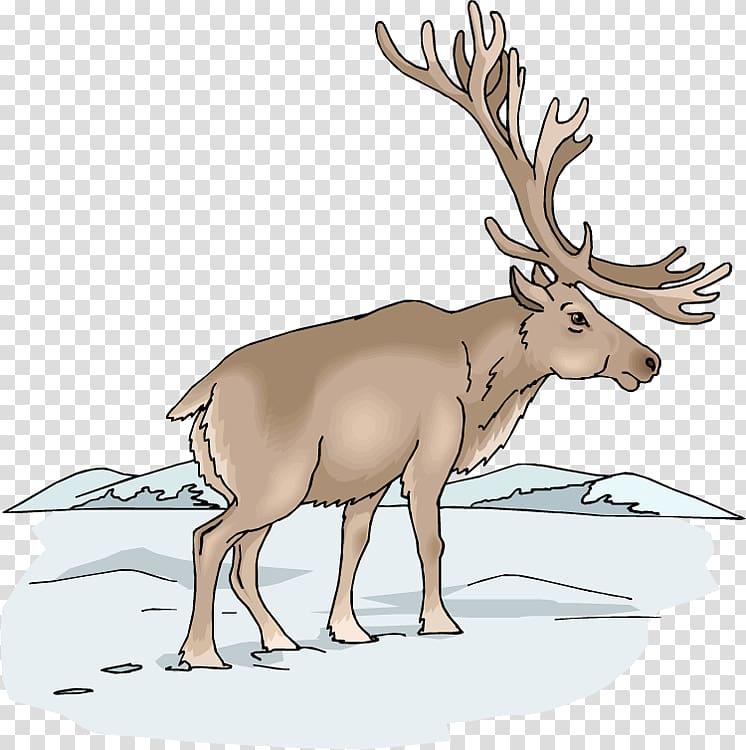 Moose Elk Deer , Winter Moose transparent background PNG.