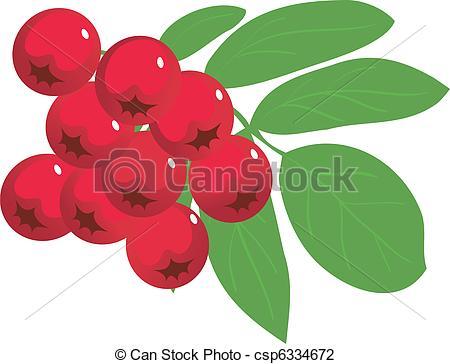 Rowan berry Clipart and Stock Illustrations. 1,536 Rowan berry.