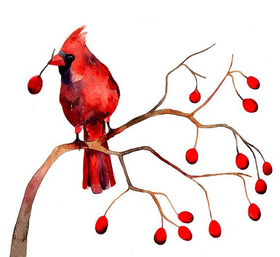 Cardinal Winter Berries Christmas Watercolor Illustration.