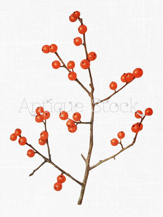 Winterberry Branch Old Image Tree Branch Clip Art Vintage by.