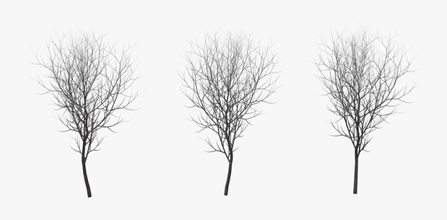 Tree Winter Png.
