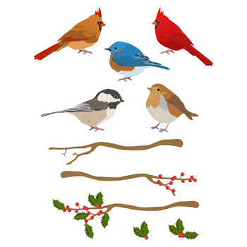 Winter bird clipart 6 » Clipart Station.