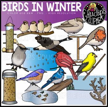 Birds in Winter Clip Art Set {Educlips Clipart}.