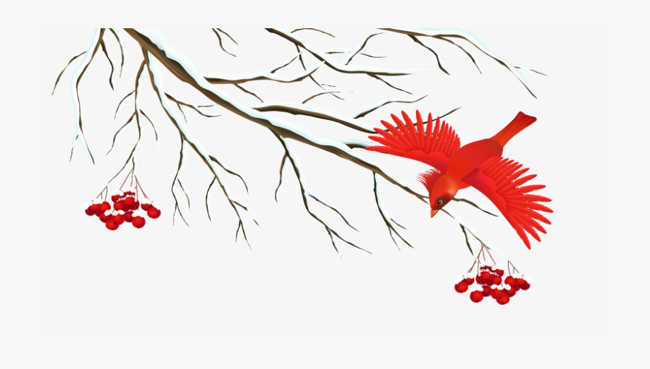 Winter Bird Png , Transparent Cartoon, Free Cliparts.