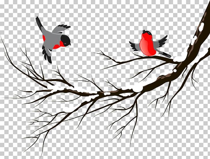 Bird European robin Winter , birds PNG clipart.