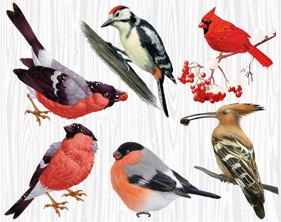 Birds Clipart,Bullfinch,Woodpecker,Winter bird,bird on a.