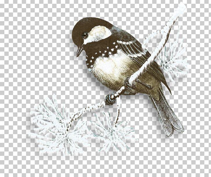 Snow Flurry Winter Bird PNG, Clipart, Beak, Bird, Bird Cage.