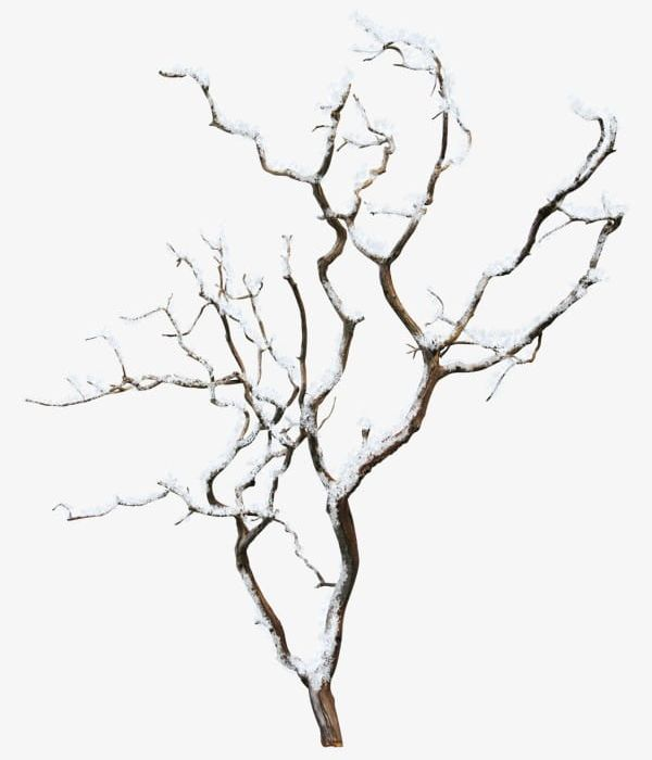Winter Tree PNG, Clipart, Branches, Plant, Tree, Tree.