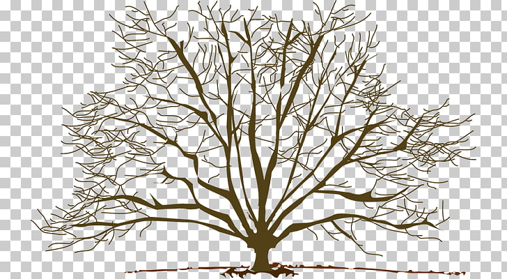 Tree Winter Branch Pine , Winter Branch s PNG clipart.