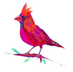 Winter Cardinal Clipart photos, royalty.